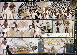 Vigne-Egypte